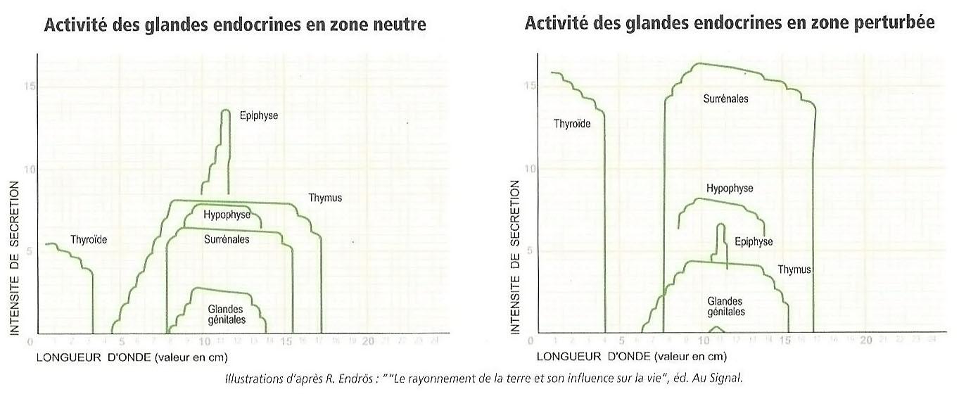 Activités des glandes endocrines