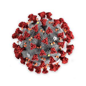 Coronavirus_Modele_300-300